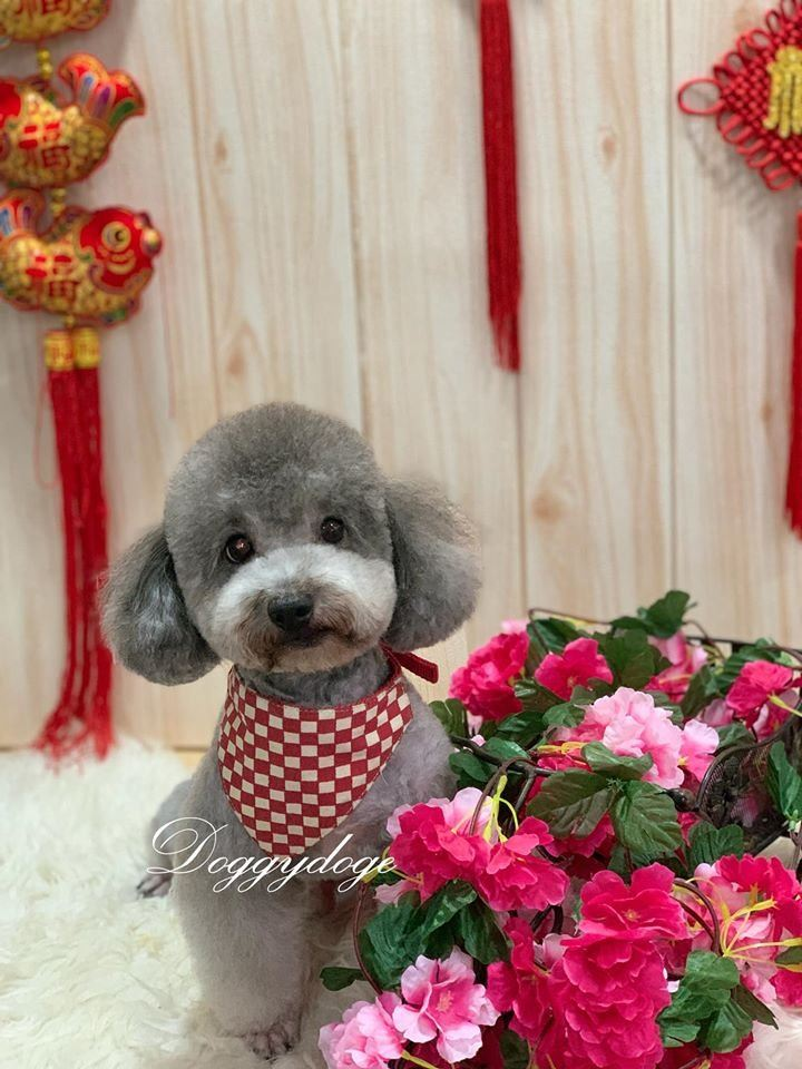 We Can Make You Happy Handsome On Chinese New Year!!!!