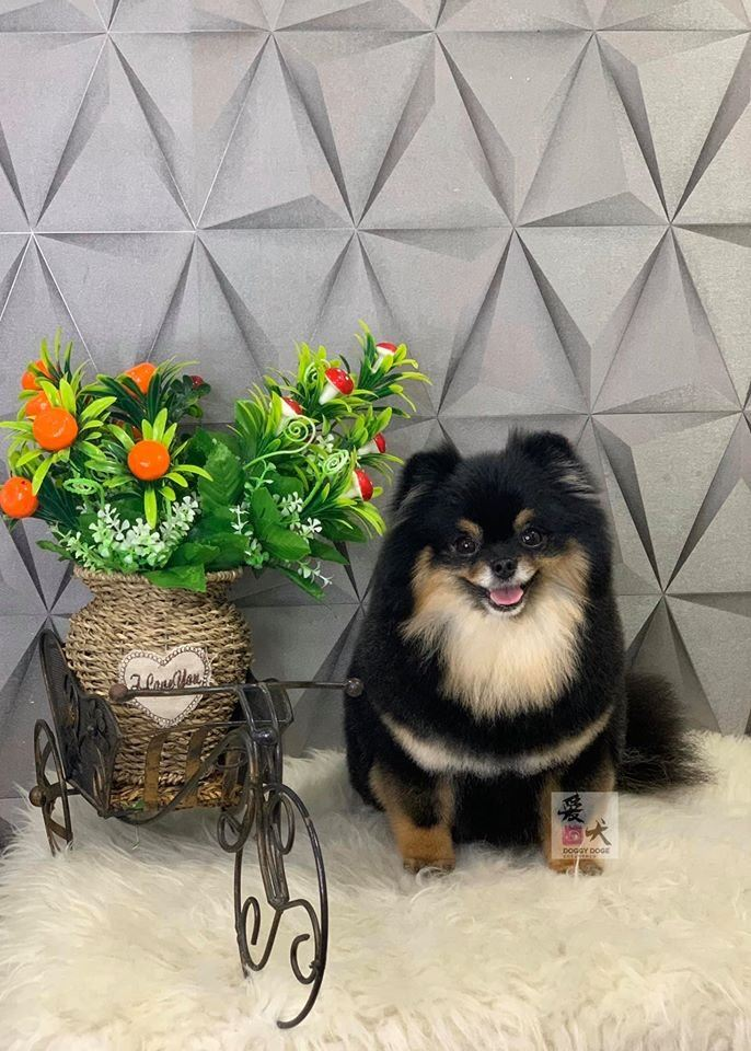 You Are Welcome To Visit Our Pet Groomer Academy