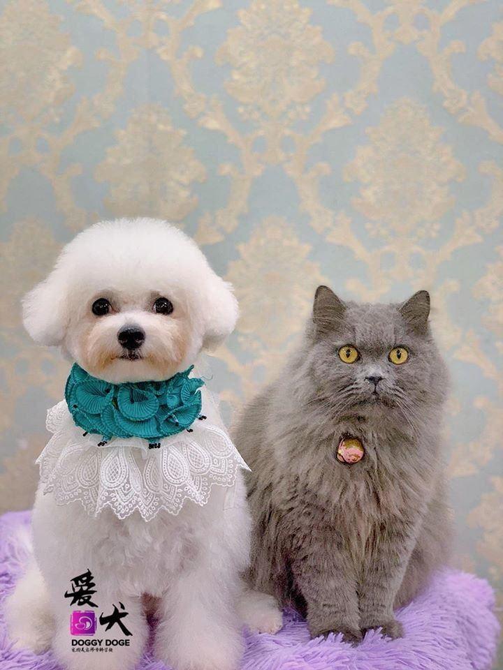 Dog & Cat - Can Be Friend è���ദ������