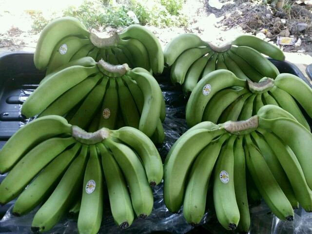 banana wholesale