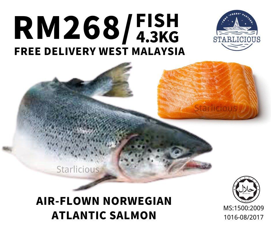 Fresh Atlantic Salmon 4.3kg