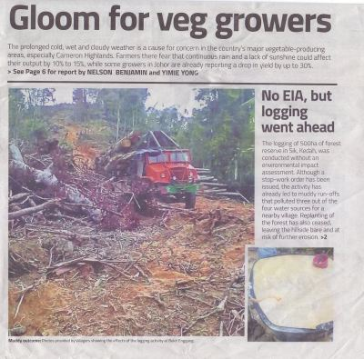 Gloom For Veg Growers !! 15january2018 #thestar