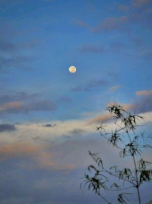 Morning Moon !