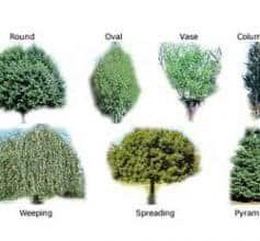 Shade Trees Selection