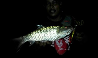 Sotelo Angler - Sebarau