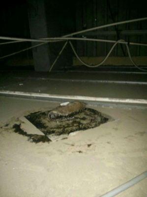 Rats Control Treatment