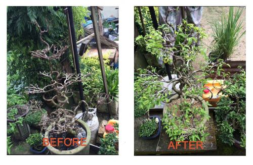 Testimonial 1 Before and After