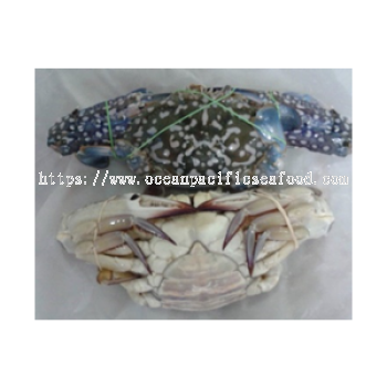 Flower Crab /ketam bunga 100-150g/Pcs��sold per KG��**buy more save more