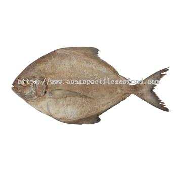 黑鲳鱼 300-500gm (Sold per nos)