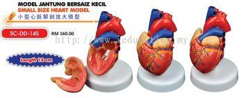 SC-DD-14S model Jantung Bersaiz Kecil