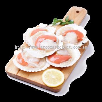 Half Shell Scallop Size 7/8, 8/9, 9/10 (Non Sashimi Grade)