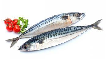 Norway Mackerel Saba Whole Size 400/600 (20kg/ctn)