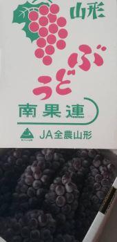 Grape Delaware Jpn