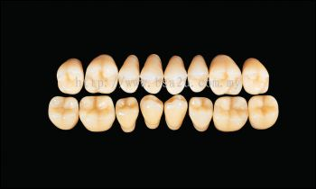 Hard Resin Teeth (M30)