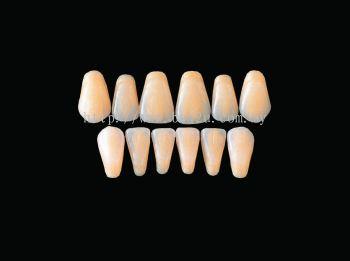 Hard Resin Teeth (C3-C6)