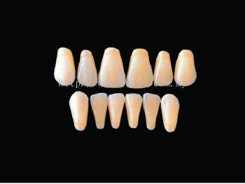 Hard Resin Teeth (T3-T6)