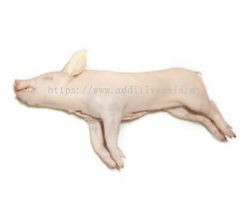 Suckling Piglet