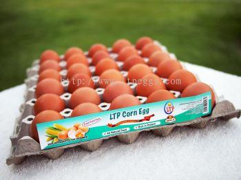 LTP Corn Egg - Grade D