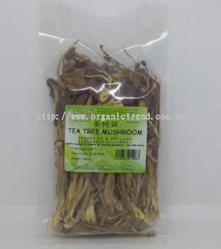 TEA TREE MUSHROOM*������