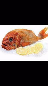 Ikan Orange Rought