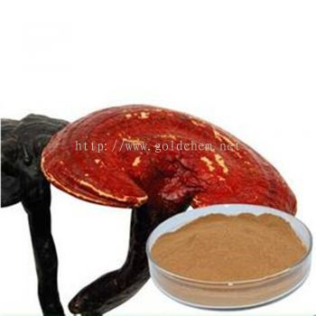 Ganoderma Extract Powder