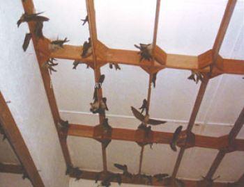 Swiftlet House Frame