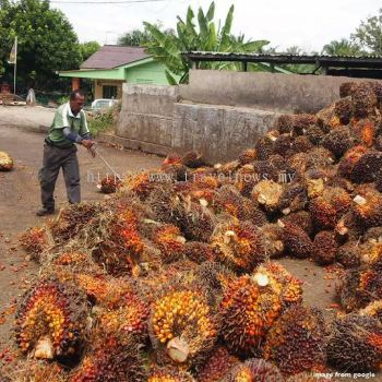 FGV Hopes PM��s China Trip Will Benefit Palm Oil Sector