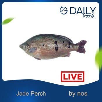Jade Perch - LIVE