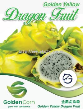 Golden Yellow Dragon Fruit