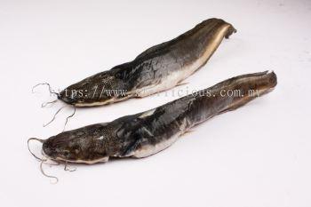 Ikan Keli