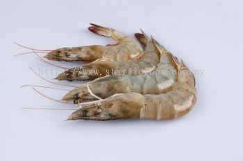 Vannamei White Prawn (Head-On-Shell-On)