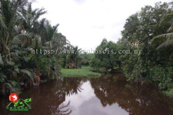 Pilajau - Borneo's Amazon