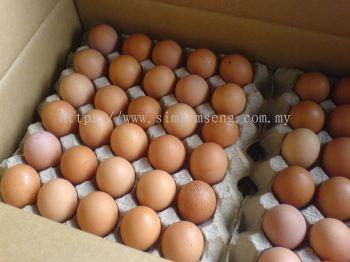 Egg x 30s