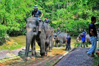 Elephant Sanctuary & Deerland