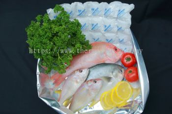 Chilled Seafood Export Packing