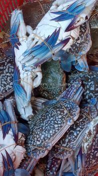 ╗ели(Flower Crab)