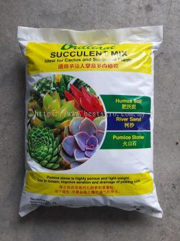 Succulent mix  7LTR ����ֲ��