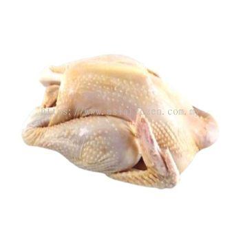 Botak Chicken 1.6kg-1.8kg+-
