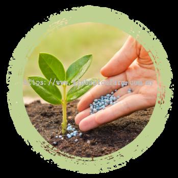DURIAN PLANTING & FERTILIZER