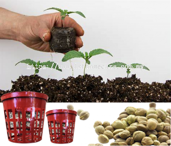 35mm Seedlings Flower Pot(20pcs)