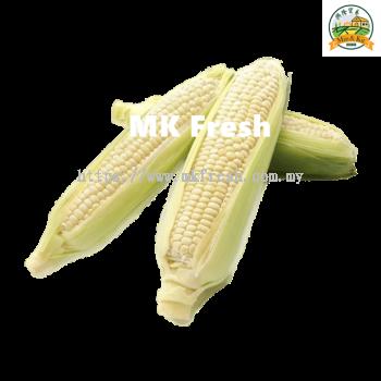 White Sweet Corn ������