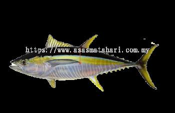 Frozen Whole Yellowfin Tuna