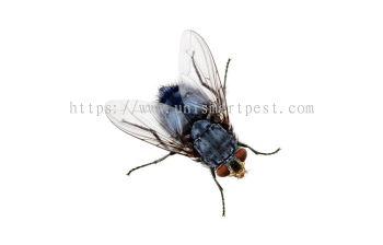 Flies Solutions
