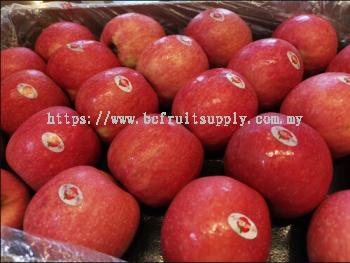 Apple Pink Lady